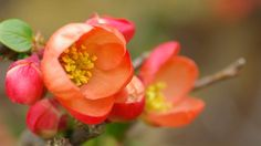 Article: What to do with your trees shrubs and climbers in March. From the March gardening board