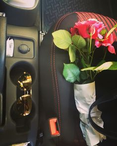 Flowers / roses / homegarden / on the way to work