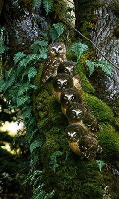 The Family Tree Carl Brenders