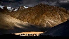 Camel Train, Himalayas, India - photo by Nick Melidonis, via Your Shot, NGM (3/22/16);  I was photographing monasteries in Ladakh region in the high Himalayas in India & crossed the Khardungla Pass at 18,380 feet and descended into the Nubra Valley. ...As the sun was setting...I noticed the camel train... I just got a few frames when the shaft of gold light disappeared. The image won the silver medal for the Nature category (landscape/wildlife) at the ... World Photographic Cup held in…