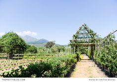Beautiful garden at Babylonstoren