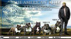 Image result for york bloodlines pitbull