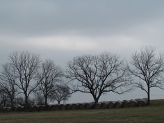 $45 11 x 14; other sizes avail.  Peaceful trees in a field under cloudy sky. (Carthage, MO)