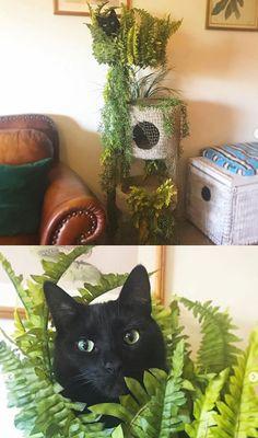 Outdoor Cat Tree, Cat Habitat, Diy Cat Tree, Cat Towers, Cat Playground, Animal Room, Unique Cats, Cat Room, Cat Crafts