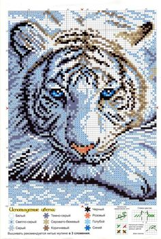Cross-stitch White Tiger...    Gallery.ru / Фото #1 - 616 - Milka35: