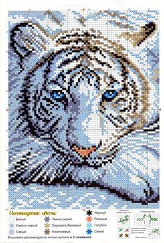 Cross-stitch White Tiger...    Gallery.ru / Фото #1 - 616 - Milka35: