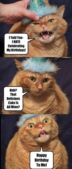 101 Funny Cat Birthday Memes for the Feline Lovers in Your Life Happy Birthday Crazy Lady, Funny Happy Birthday Images, Cat Birthday Memes, Happy Birthday Meme, Funny Cat Videos, Funny Cats, Hapoy Birthday, Kitten Love, Grumpy Cat
