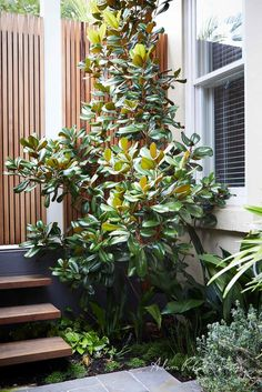 Outdoor Steps One of the best ways to create a visually interesting outdoor living space is to play with changing levels in your design Balcony Design, Garden Design, Outdoor Spaces, Outdoor Living, Outdoor Retreat, Pantone Greenery, Outdoor Steps, Australian Garden, Floating Flowers