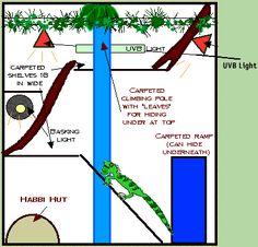 Planning a Habitat. Green Iguana Society.