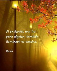 〽️ Buda...