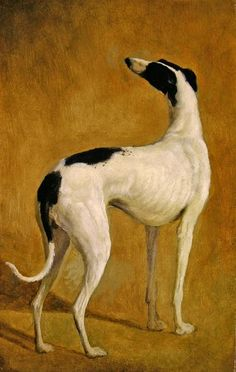 Study of a Greyhound, by Jacques Laurent Agasse. Absolutely beautiful!