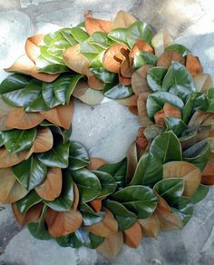 Hey, I found this really awesome Etsy listing at https://www.etsy.com/listing/47507729/magnolia-leaf-wreath-fresh-22-inches