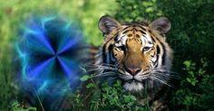 Ce animal se ascunde în tine?