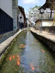 """Hida Furukawa is the second major town after Takayama in the northern part of Gifu Prefecture.  Although both are popular as """"sho-Kyoto (little Kyoto)"""", you will experience the kind of serenity in Hida Furukawa that cannot be found in Takayama. Carp swim in the canals!"""