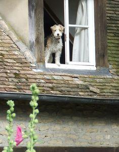 windows.quenalbertini: Doggy in the window | ilclanmariapia