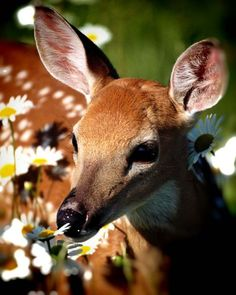 phototoartguy:    Yellow Flowers with Deer