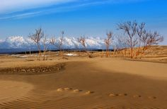 Beautiful Contrast Between the Bright Yellow Sand Dunes and Snow Covered Mountains form one spectacular view at Chara Sands, Siberia, Russia. Ural Mountains, Central Asia, Amazing Flowers, Chara, Beautiful World, Deserts, Ocean, Sands, Beach