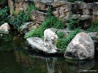 Something about Singapore… Singapore Zoo, Lion Sculpture, Statue, Travel, Voyage, Viajes, Traveling, Sculpture, Trips