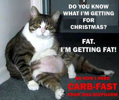 Funny Fat Cat Pictures With Captions Background 1 HD Wallpapers Fat Cats Funny, Silly Cats, Cats And Kittens, Funny Kitties, Bad Cats, Fat Cat Pictures, Funny Pictures, Funny Pics, Daily Pictures