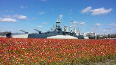 Sea of flowers around the BB55