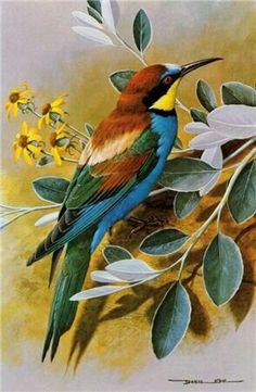 Ideas For Colorful Bird Painting Draw Bird Illustration, Bird Drawings, Bird Pictures, Vintage Birds, Colorful Birds, Wildlife Art, Wild Birds, Bird Prints, Bird Art