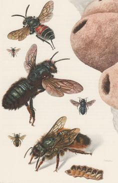 1957 Bees Antique Print Vintage Offset Lithograph by Craftissimo, €13.95