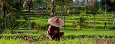 L'agroecologie peut doubler la production mondiale en 10 ans, selon l'ONU