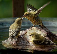 bird bath with solar powered mister or fountain - Google Search