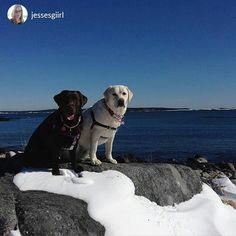 from @jessesgiirl Beachin' it ✌️#halifax #yhz #haligonia #love #tweegram #photooftheday #amazing #smile #all_shots #follow #qwebstagram…