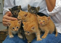 Overbooked Crazy Cat Lady  Photo by ©aswike66~Scott