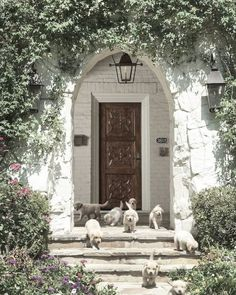 """A cozy cottage """"fit for a dog"""" or two or three or four or, more ... you decide:-) 🐾🐾"""