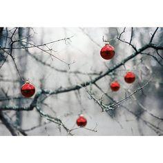 _ #christmas #woods #red #decor #tree #plant #winter #analogue #analog #film #필름사진 #사진 #일상사진 #일상 #필름카메라 #필름 #사진스타그램 #아날로그 #카메라 #일상스타스램 #여행사진 #여행 #여행스타그램 #크리스마스 #크리스마스데코 __________________________________ Happy Christmas Eve yall!  - Architecture and Home Decor - Bedroom - Bathroom - Kitchen And Living Room Interior Design Decorating Ideas - #architecture #design #interiordesign #diy #homedesign #architect #architectural #homedecor #realestate #contemporaryart #inspiration #creative #decor…