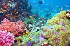 I love snorkeling! Been lucky enough to see sea life this beautiful!!!