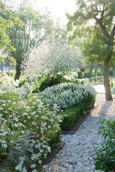 Kalimeris incisa 'Alba' (Indian aster) Salvia nemorosa (woodland sage) Crambe cordifolia (heartleaf crambe) Klazina van Kippersluis