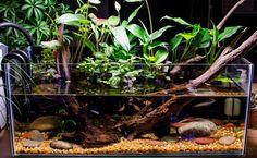 Pablo's Rimless Riparium - Page 4 Frog Terrarium, Aquarium Terrarium, Planted Aquarium, Saltwater Fish Tanks, Aquarium Fish Tank, Rimless Aquarium, What Is Landscape Architecture, Aquarium Design, Aquarium Setup