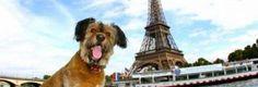 Francia otorga a Perros y Gatos derechos de un ser vivo