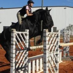 Who says draft horses can't jump?