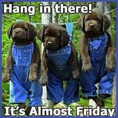 Funny Thursday Quotes, Wednesday Humor, Friday Humor, Tgif Funny, Funny Jokes, Hilarious, Good Morning Happy Thursday, Good Thursday, Happy Friday