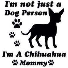 Chihuahuas or sub your fur babies breed! Soon I'll be, 7 years til' I can get one, not too long!