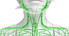 Příznaky ucpaného lymfatického systému a 10 způsobů, jak ho znovu vyčistit