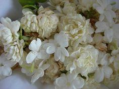 Plant jasmine for garden fragrance White Flowers, Beautiful Flowers, Smelling Flowers, Up In Smoke, Garden Plants, Planting Flowers, Home And Garden, Bouquet, Jasmine Jasmine