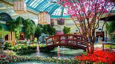 Bellagio Botanical Gardens - Las Vegas - Spring 2015
