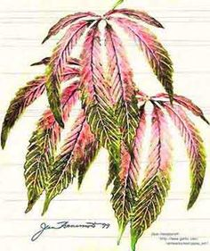 this would be an awesome incognito pot leaf  shoulder /arm tat
