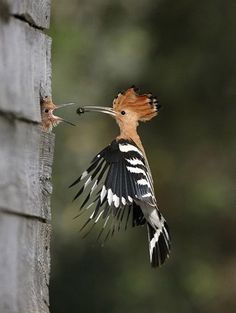 amazing birds from around the world - Google Search