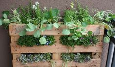 How To Build A Vertical Pallet Garden In The Tiniest Of Spaces