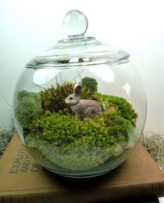 Terrarium, Small Covered Vase , Bunny, Moss.,Great for HOME or OFFICE. Terrariums moss terrariums