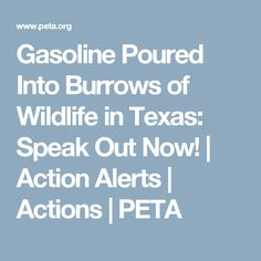 Gasoline Poured Into Burrows of Wildlife in Texas: Speak Out Now! | Action Alerts | Actions | PETA