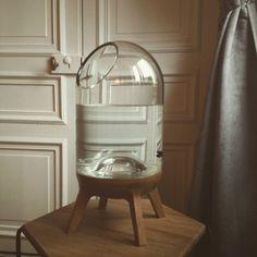 «@concepticolas nous prouve qu'un aquarium peut être déco et design #paris #ticolas #concepticolas #design #deco»