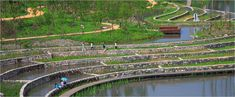 Wetland cells, green cells, etc / Turenscape / Shuicheng River and Minhu Wetland Park