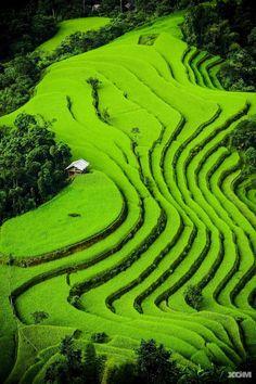 Arrozales alrededor de la ciudad de Sapa, Paisaje típico del norte del Vietnam. Ideal para practicar senderismo